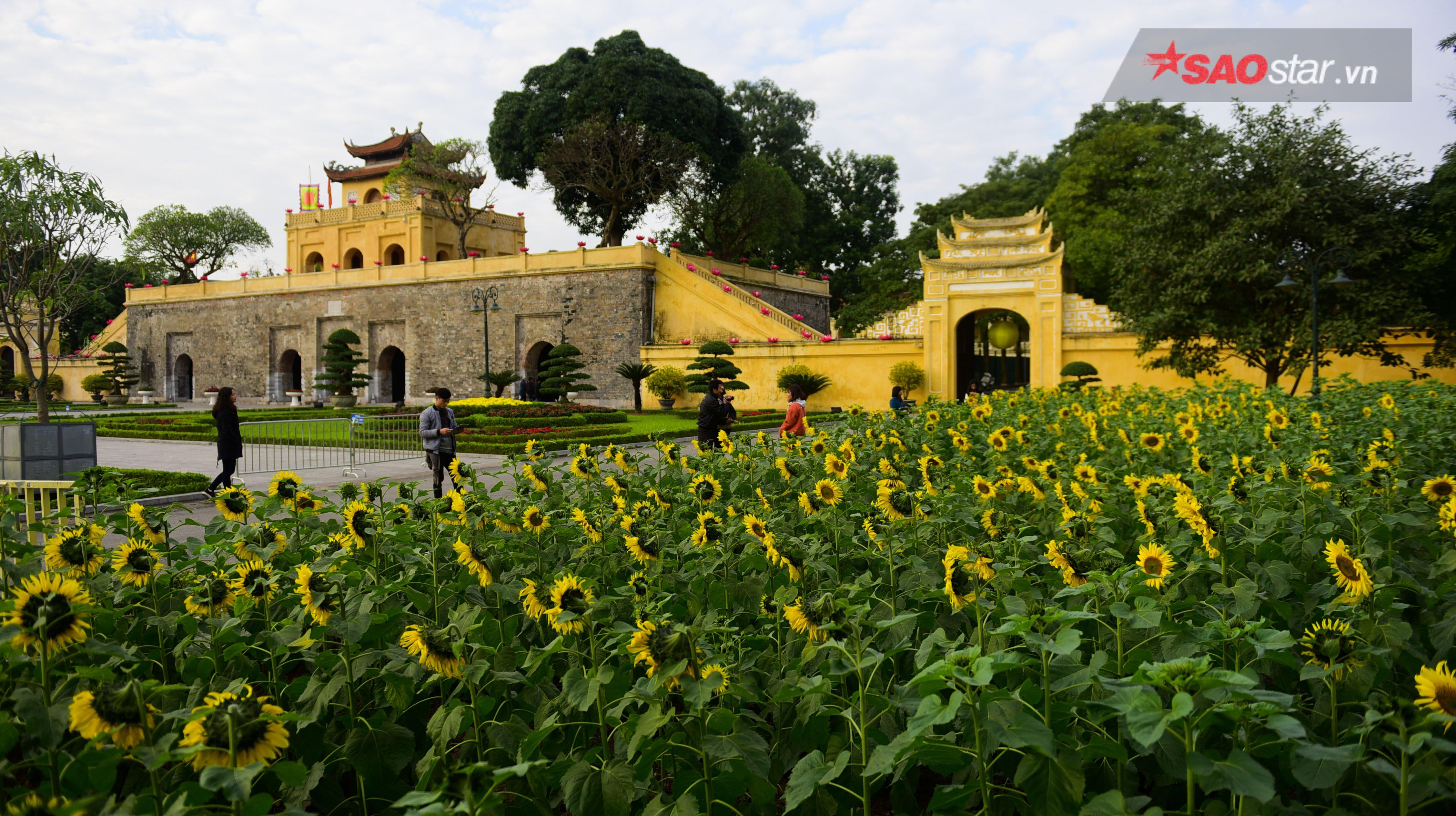 Các luống hoa nằm ngay trong khuôn viên của quảng trường dẫn đến Đoan Môn.