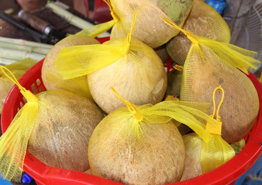 Mỗi quả dừa sáp chỉ dao động từ 150.000 đồng đến 180.000 đồng, rất thích hợp để làm quà Tết.