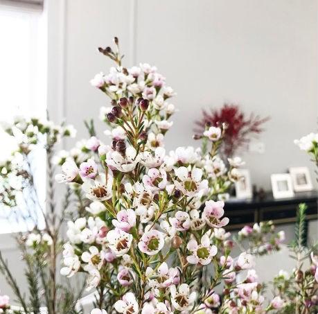 Hình ảnh gia đình Tăng Thanh Hà ngập tràn sắc hoa trong ngày Tết.
