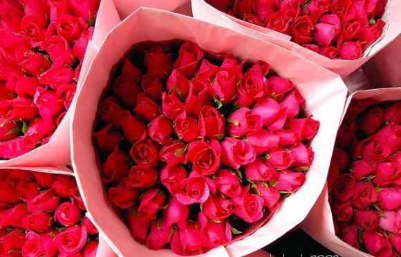 Hoa hồng là biểu tượng của tình yêu.