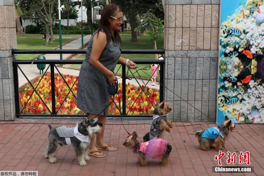 Một người dân mang những chú cún của mình tới tham dự lễ Valentine.
