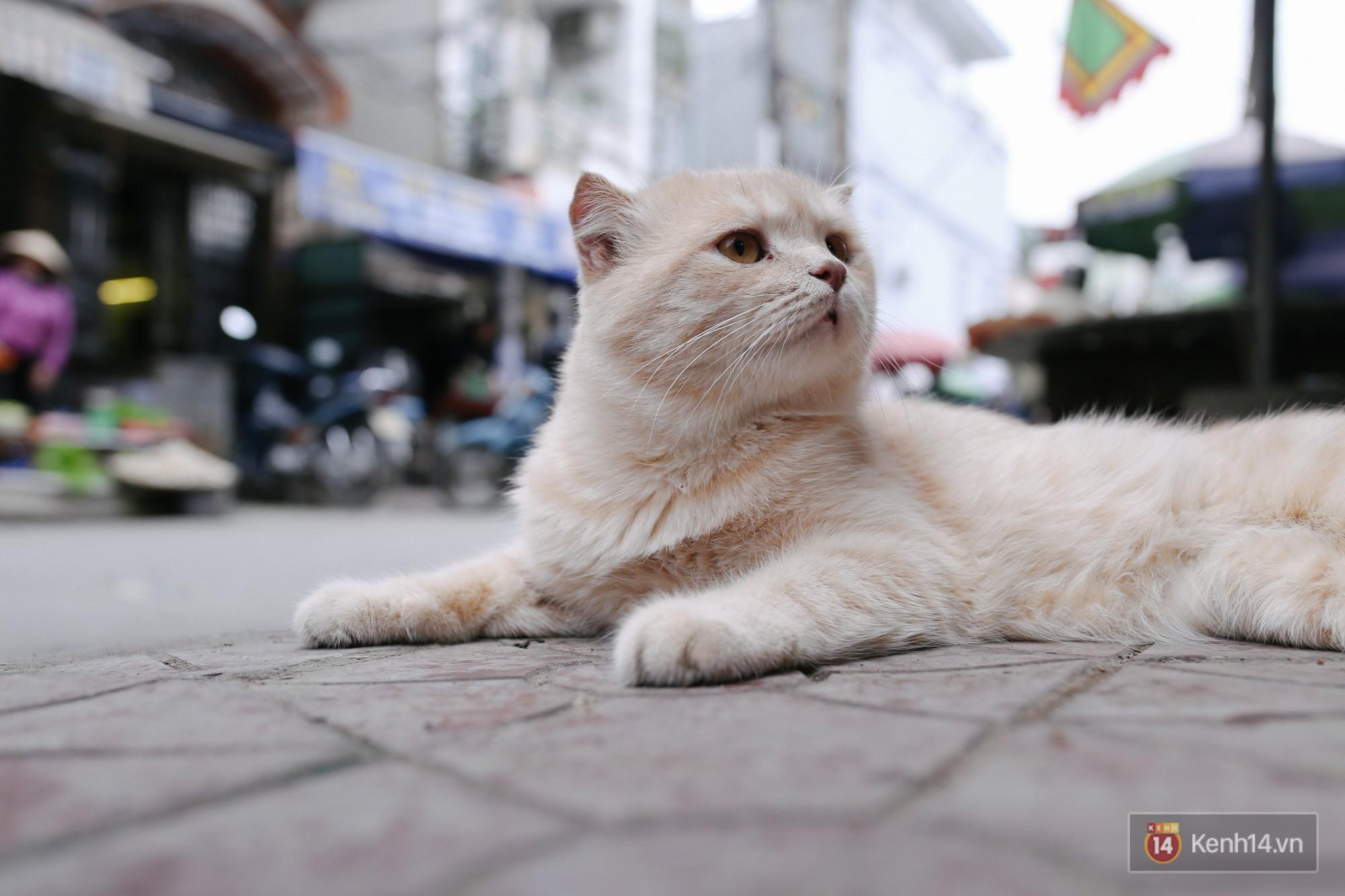 Tên Chó vậy thôi chứ Chó là một con mèo đích thực nhé!