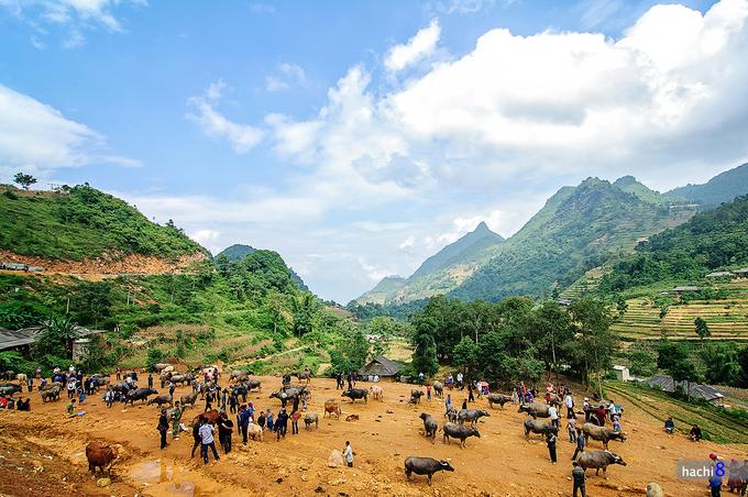Khám phá những khu chợ độc, dị chỉ có ở Việt Nam