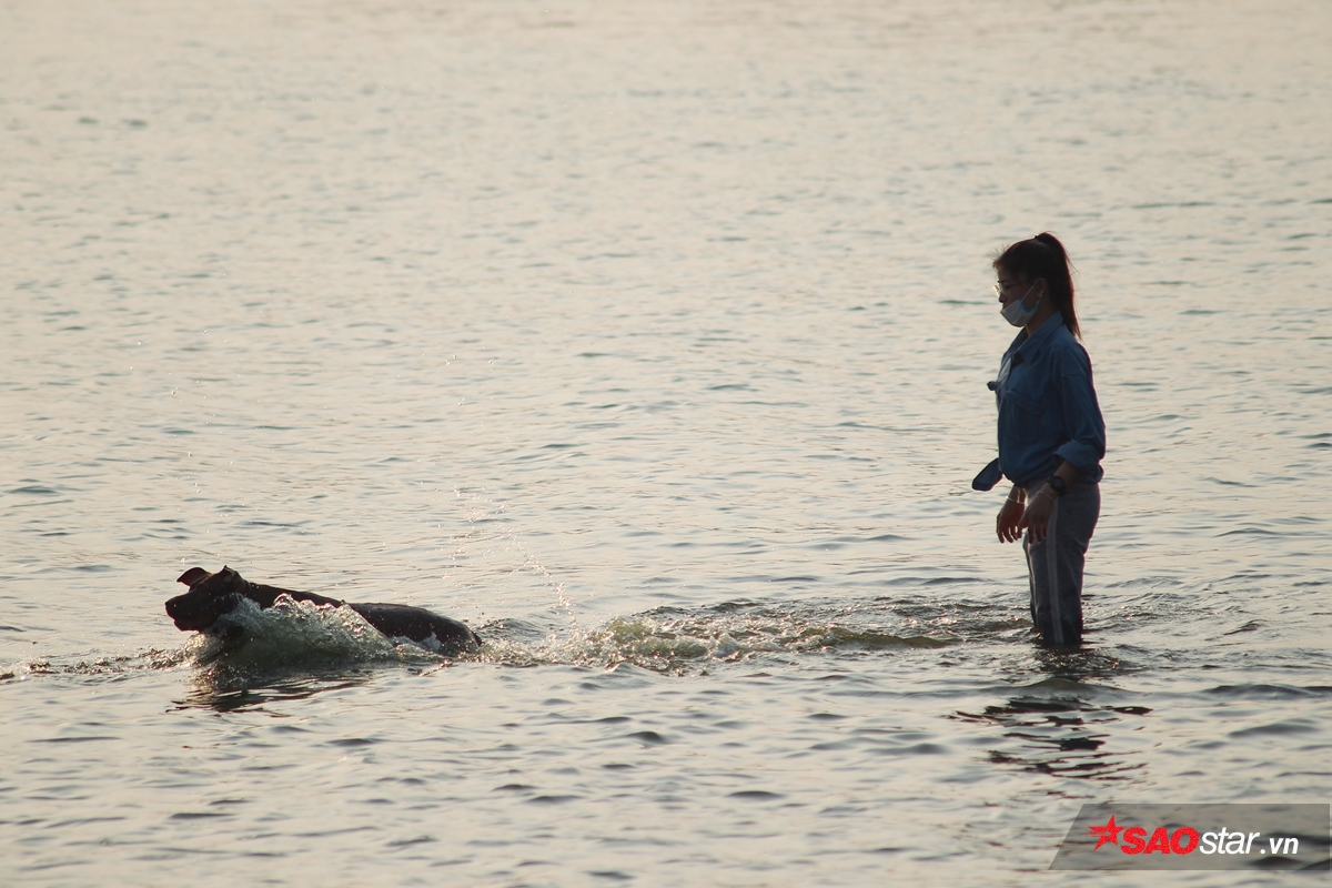 Chú chó pitbull này đang hào hứng chơi bắt bóng dưới nước cùng cô chủ của mình.