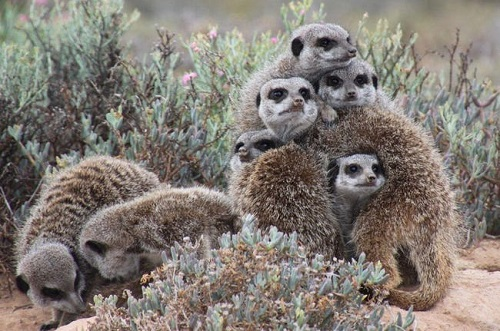 Loại động vật hoang dã nào tượng trưng cho khí chất 12 chòm sao?