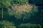 Vài gợi ý du lịch sinh thái Bình Phước ngày cuối tuần