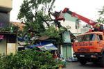 Cây xanh cao 20m đè sập 2 căn nhà giữa Sài Gòn