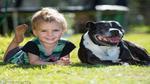 Chú chó anh hùng xả thân cứu sống bé trai 2 tuổi