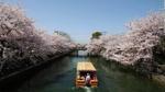 Cố đô Kyoto - Nàng thơ xứ anh đào