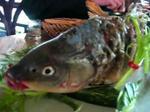 Khách hàng kinh ngạc chứng kiến con cá sống lại trên đĩa