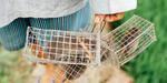 Cận cảnh quy trình đưa chuột lên bàn nhậu ở làng chuột lớn nhất miền Tây