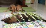 Rớt nước mắt trước 'đám tang' của chú chó bị đánh bả