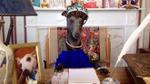 Ngộ nghĩnh chú chó kiêu sa có sở thích hóa trang