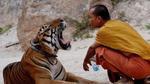 Xót thương những chú hổ tội nghiệp trong ngôi đền hổ nổi tiếng ở Thái Lan