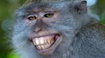 10 sự thật về loài khỉ - sinh vật bắng nhắng nhất thế gian