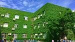 Độc đáo trường mầm non được bao phủ toàn bộ bằng nho xanh