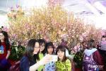 Giới trẻ hào hứng với lễ hội hoa anh đào lần đầu tiên tổ chức tại Sài Gòn