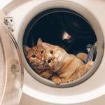 'Choáng ngất' với 'cặp đôi mèo' siêu yêu