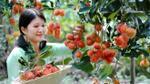 5 'vương quốc trái cây' ngay cạnh Sài Gòn không phải ai cũng biết