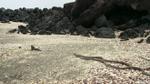 Cuộc đuổi bắt của rắn với kỳ nhông: Hoá ra thiên nhiên cũng 'kịch tính' không kém phim hành động