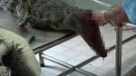 Hình ảnh rùng rợn bên trong một trang trại cá sấu ở Việt Nam lên báo nước ngoài