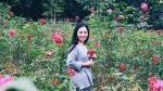 Con đường khởi nghiệp với 20.000 gốc hoa hồng sạch của nữ luật sư Hà Nội