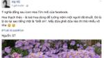 Facebook có nút reaction 'thả hoa' mừng Ngày của mẹ, nhưng cư dân mạng đang 'biết ơn' cái gì thế kia?