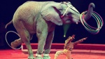 Chuyện chú voi lớn lên trong rạp xiếc và những 'rào cản vô hình' ngăn con người đến thành công