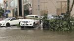Nghệ An: Tan hoang sau bão, cây xanh bật gốc đè ô tô, người dân chặt cây tìm đường vào nhà