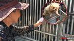 Vây bắt chó thả rông khu vực Thủ Đức: 4 chú chó lên xe về trại, chủ hốt hoảng chạy theo xin về