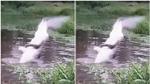 Ném chó mèo xuống sông cho cá sấu ăn sống ở Colombia