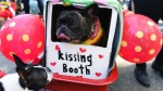 Lễ diễu hành hoành tráng cho cún cưng dịp Halloween ở thành phố New York, Mỹ