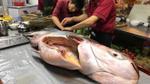 Đổ xô mua cá 'khủng' giá 1,5 triệu đồng/kg được chuyển bằng máy bay về Việt Nam