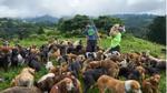 'Thiên đường' của những chú chó hoang: Hội mê chó chắc chắn thích điều này