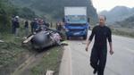 Tai nạn kinh hoàng 4 người tử vong ở Sơn La: Hơi thở tài xế có nồng độ cồn