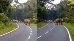 Hãi hùng cảnh voi khổng lồ giẫm chết người ở Ấn Độ