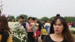 Bất chấp trời rét 15 độ C, người Hà Nội vẫn xúng xính váy áo, rủ nhau đi chụp ảnh cùng cúc họa mi