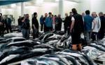 Tết Nguyên đán 'nóng' vì vi cá mập