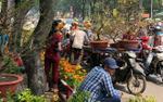 Cây cảnh bán rẻ như cho vẫn bị ép giá, tiểu thương Sài Gòn chặt nát vứt vào thùng rác