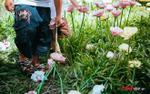 Hàng nghìn lượt khách kéo nhau chụp hình, giẫm nát vườn hoa hồng hoa tulip trong ngày đầu xuân
