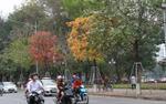 Ngắm những con phố đổi màu xanh, vàng, trắng đỏ đẹp như trong phim Hàn Quốc