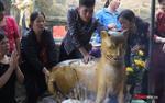 Dòng người chen nhau xức dầu lên tượng 'hổ thần' mong khỏi bệnh ở chùa Hương Tích