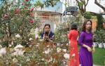 Hàng nghìn người thích thú kéo đến lễ hội hoa hồng Bulgaria chụp ảnh nhân ngày 8/3