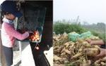 Nhói lòng chứng kiến loạt thảm cảnh rớt giá: Hết hoa ly, củ cải rồi lại đến cà chua trở thành rác thải, thức ăn cho vật nuôi