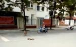 Clip khiến nhiều người rơi nước mắt về tình cảm những chú chó mẹ dành cho đàn con của mình