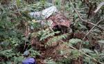 Phát hiện thi thể người đàn ông đang phân hủy giữa rừng, nghi do chết đói