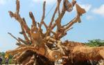 Lộ diện chủ nhân Hà Nội 32 tuổi của 2 cây 'quái thú'