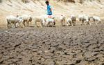 Nắng nóng kinh hoàng kéo dài ở Ninh Thuận: Cừu chết, đất cháy, nguồn nước cạn kiệt và nguy cơ cháy rừng ở mức báo động