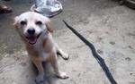 Nụ cười cuối cùng của chú chó cùng ánh mắt 'Em làm tốt chứ cậu chủ?' trước khi chết khiến dân mạng xúc động