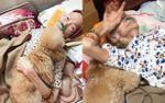 Nghẹn ngào chuyện chú chó rơi nước mắt ngày ngoại nằm giường bệnh, 'túc trực' đến khi ngoại qua đời